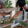 An Urban Gardening P