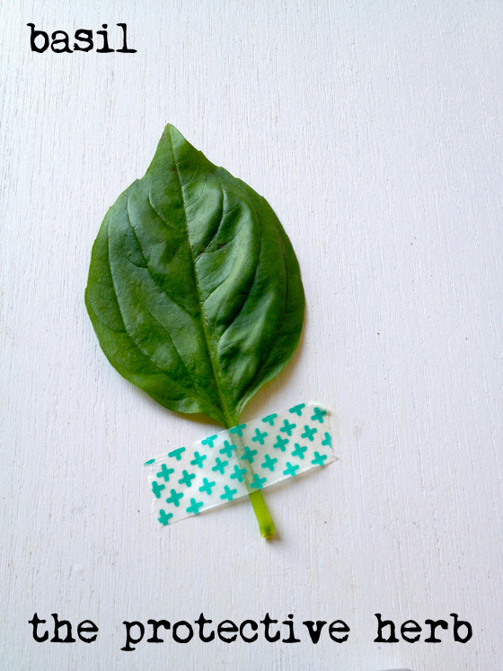 Basil - the protective herb