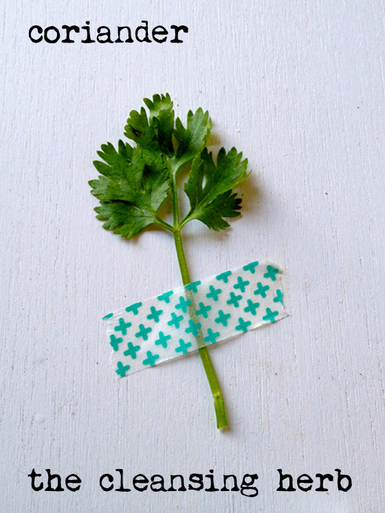 Coriander - the cleansing herb
